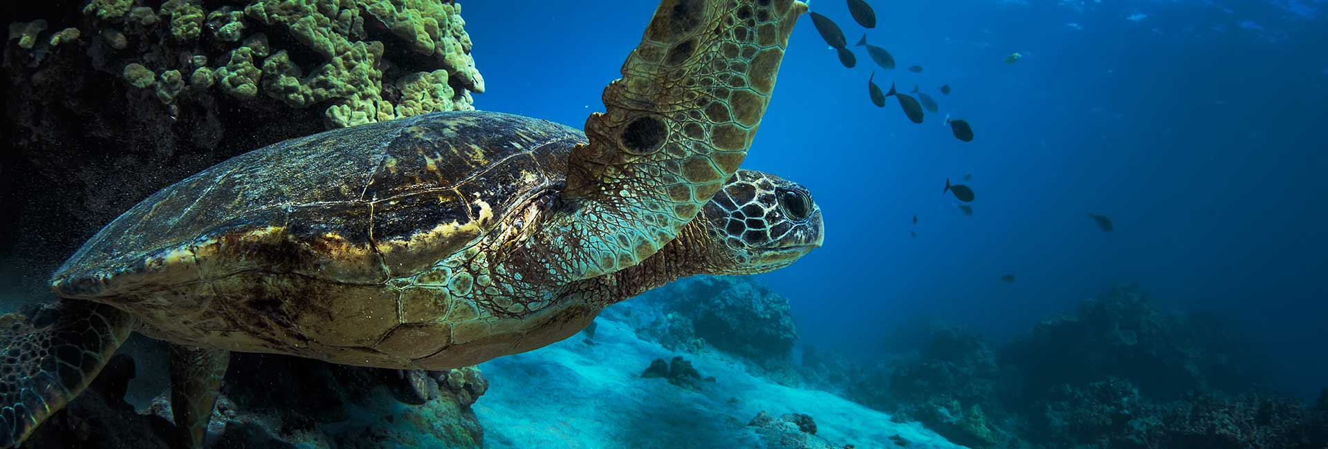 close up on a turtle