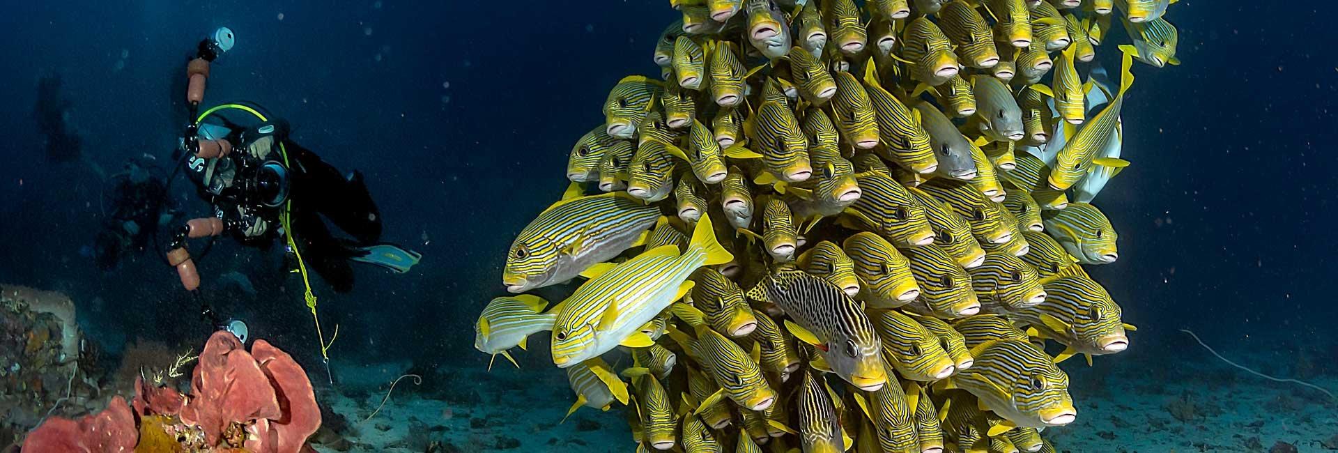 11_Dive Karang Bayangan on Waraket Reef