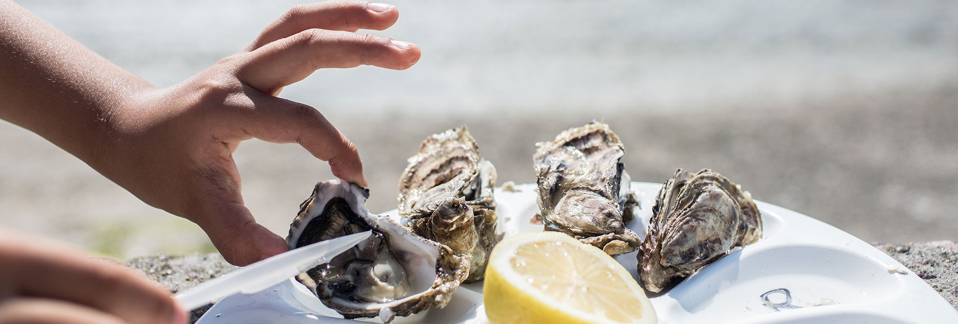 4_Feast on excellent oysters in Camden Harbour