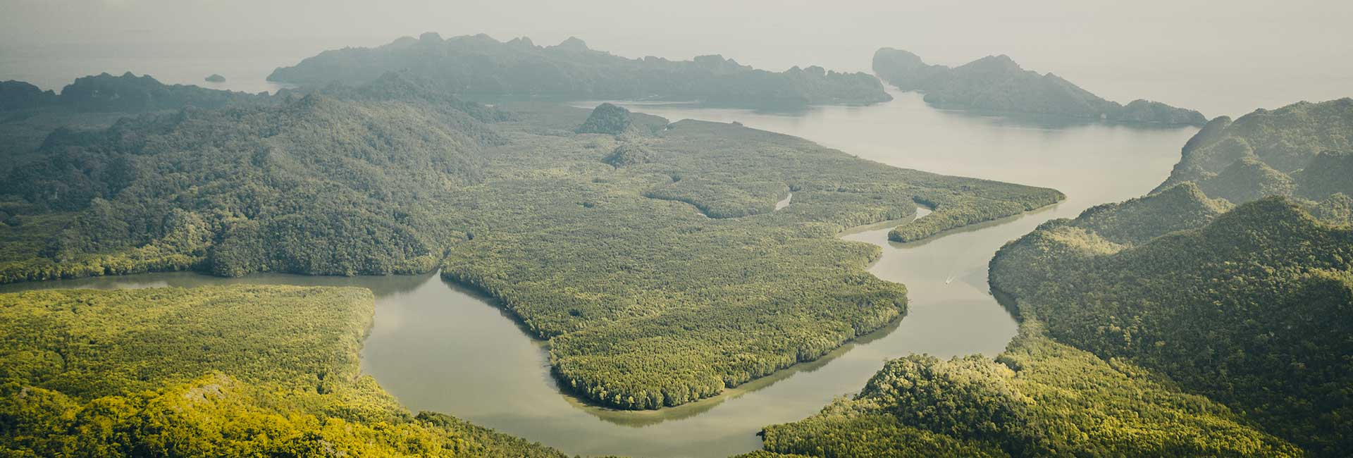 5-Mangrove-Forest